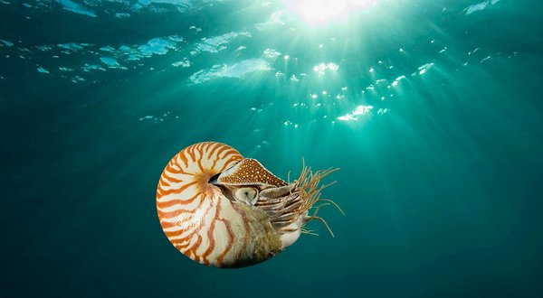 25nautilus-articleLarge.24284416[1]